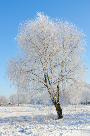 Beautiful winter landscape. Trees in hoarfrost on sunny day Stock Photo