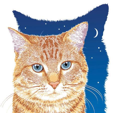 青い目を持つオレンジ色のぶち猫  イラスト・ベクター素材