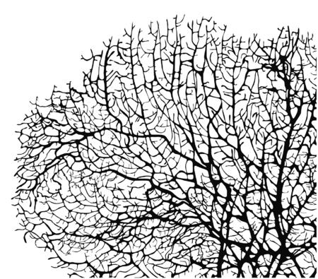 白い背景の上のサンゴのシルエットのベクトル イラスト