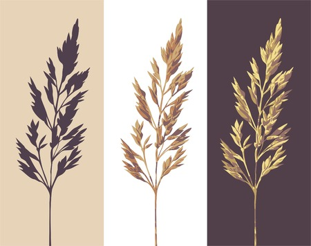 silhouette and two colour versions of a herb