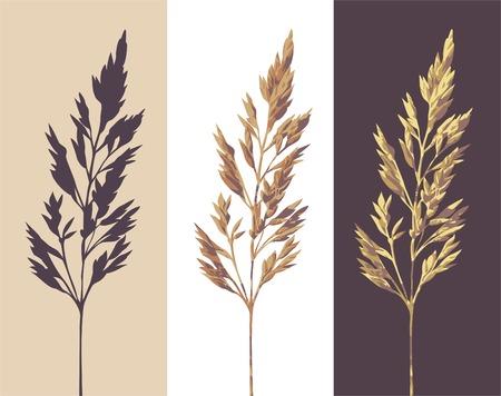 silhouette de couleur et de deux versions d'une herbe