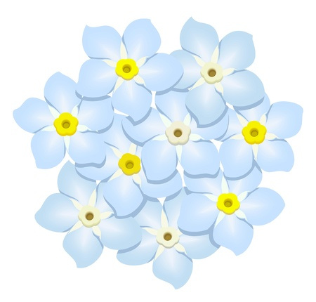 forget-me-nots isolated on white background, vector illustration Illustration