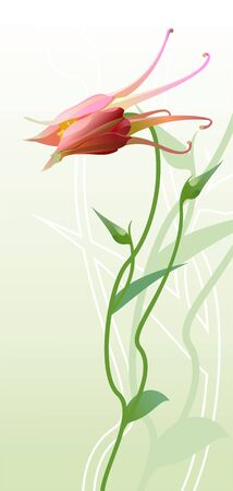 rosy: vector illustration of columbine on green background