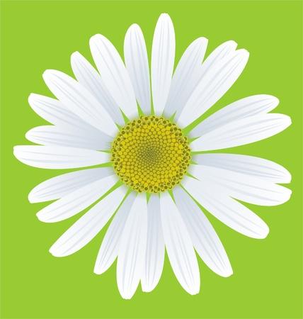 緑色の背景でカモミールのイラスト  イラスト・ベクター素材
