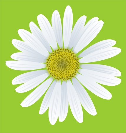 perennial: illustration of chamomile on green background
