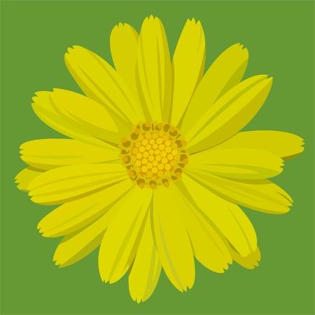 calendula flower: marigold on green background Illustration