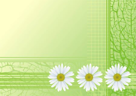 abstract green background with chamomiles Illustration