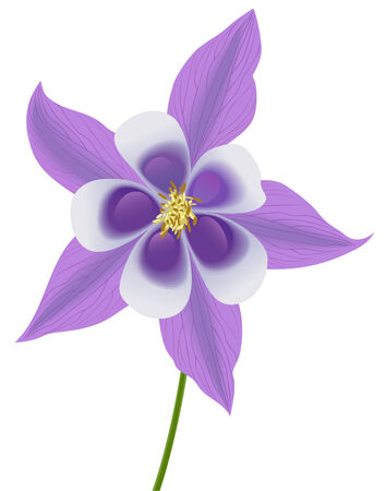 vector illustration of a violet columbine