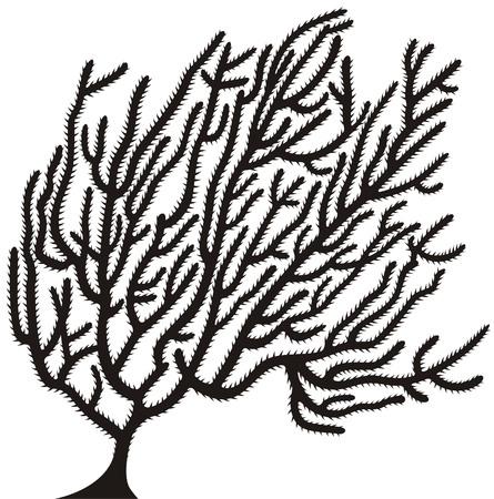Koral  Ilustracje wektorowe