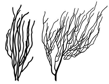 Zestaw dwóch koralowych sylwetki czarne na białym tle Ilustracje wektorowe