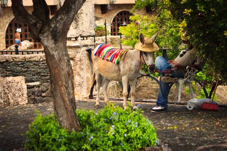michael jackson: Donkey in the village of Altos de Chavon