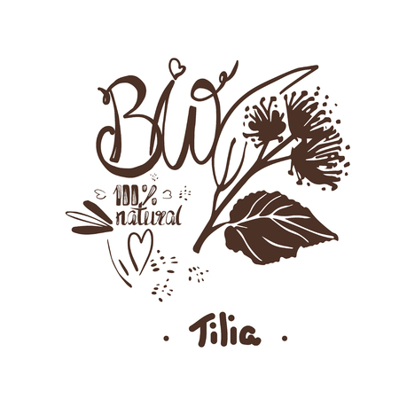 Natural drawings of  tilia, blooming flowers on white background. Decorative  Design element for packaging, Invitation cards decoration, wrapping, textiles, paper.