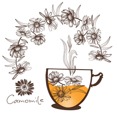 Natural drawings camomile Decorative  Design element for packaging, Invitation cards decoration, wrapping, textiles, paper.