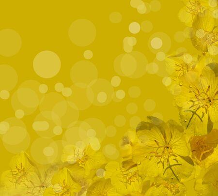 budding: Yellowe flower on the yellow background. Stock Photo