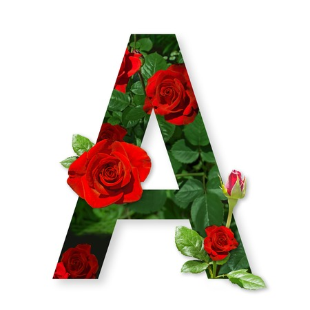 Letter A of the alphabet with red roses on white background