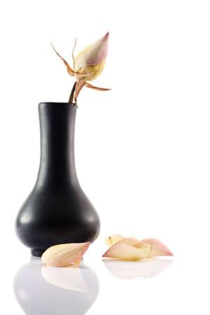 Dry rose in the black ceramic vase on white background photo