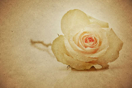 textured paper background with single rose  Stock Photo - 12657978
