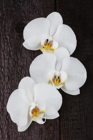 white orchid, phalaenopsis flowers on a black wooden table