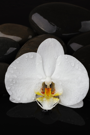 pebble stones and white orchid flower on black background, spa tranquil scene concept with reflection Фото со стока