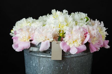 the bunch of peonies with gift card in a metal bucket on black Фото со стока