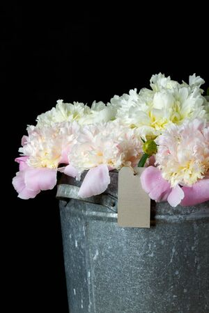 the bunch of peonies in a metal bucket on black