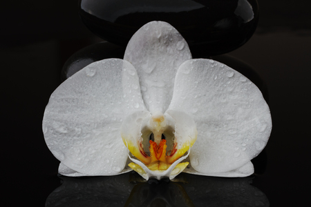 balancing pebble stones and white flower orchid on black background, spa tranquil scene concept with reflection