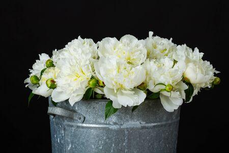 white peonies in a metal bucket Фото со стока