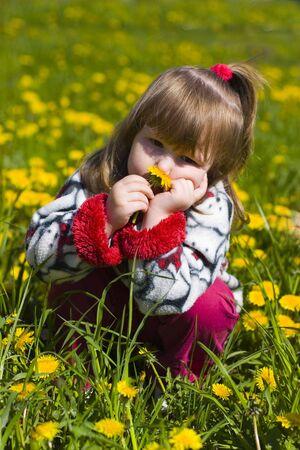 Little girl is smelling dandelion in the field photo