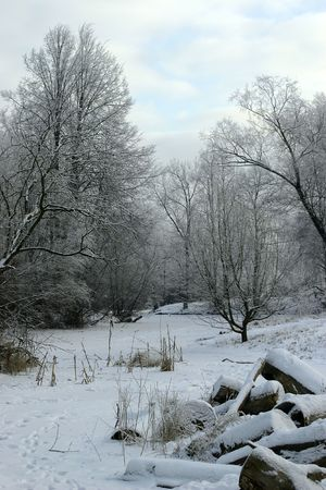 Frozen stream, trees, logs, straw under snow cover photo