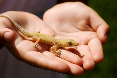 Child holding yellow lizard in his hands over sunlight photo