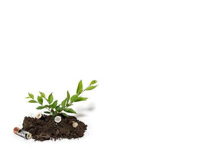 Used batteries in the ground, green tree sprout. White isolated Stock Photo