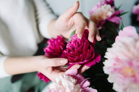 pink persian buttercup flowers in hands. Curly peony ranunculus