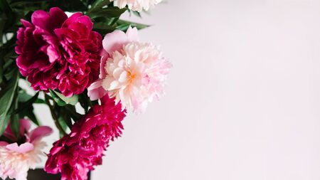 pink flowers. Curly peony ranunculus in Metallic gray watering can,empty space