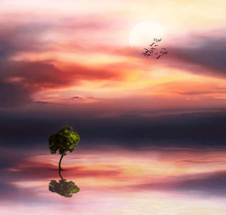 Beautiful landscape with tree on a sunset sky