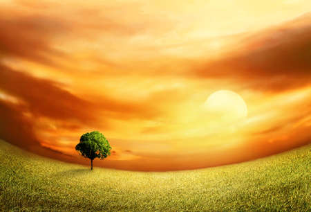 Beautiful Sunset Landscape With Field And Tree Stock Photo - 13605741