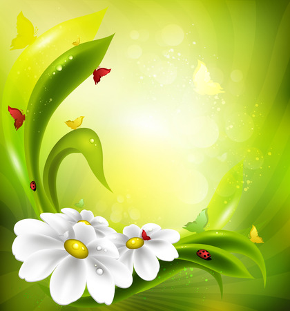 ochtend dauw: Zomer Achtergrond Met Kamille, Lieveheersbeestje, gras en vlinders