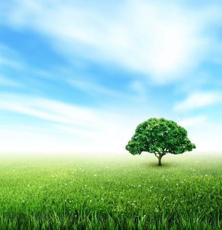 field and sky: Paisaje de verano con el campo, Cielo, �rbol, C�sped, Flowe