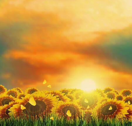 Summer Landscape With Field, Sky, Sun, Sunset, Tree, Grass, Sunflowers And Butterflies photo