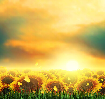 eventide: Summer Landscape With Field, Sky, Sun, Sunset, Tree, Grass, Sunflowers And Butterflies Stock Photo