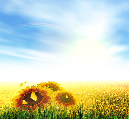 Summer Landscape With Field, Sky, Sun, Rainbow, Grass, Sunflowers And Butterflies Vector