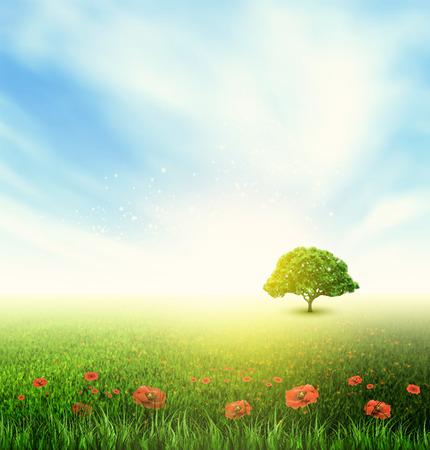 field and sky: Paisaje de verano con el campo, cielo, �rbol, hierba y amapolas en flor