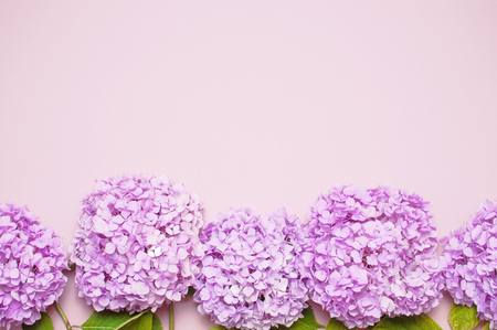 Lilac pink hydrangea flower on pastel pink background flat lay. Mothers Day, Birthday, Valentines Day, Womens Day, celebration concept Top view Floral background. Фото со стока