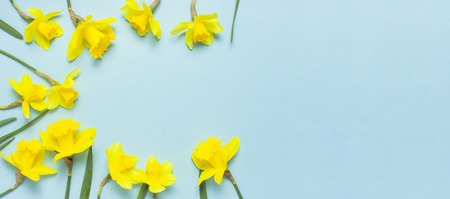 Spring floral background. Frame of narcissus or daffodil flowers on blue background top view flat lay. Easter concept, International Women's Day, March 8, holiday. Card with flowers. Place for text.