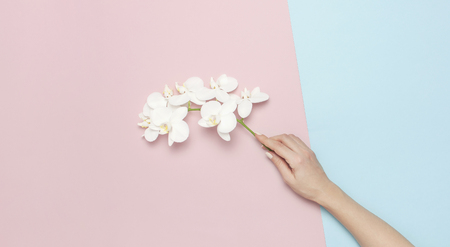 Woman's hands hold branch of Beautiful White Phalaenopsis orchid flowers on pastel pink blue background top view flat lay. Tropical flower, branch of orchid. Holiday, Women's Day, Flower Card, beauty.