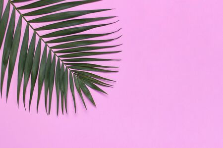 Tropical palm leaves on pastel pink background. Flat lay, top view, copy space. Summer background, nature. Creative minimal background with tropical leaves. Leaf pattern.