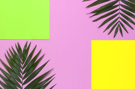 Tropical palm leaves on bright yellow green pink background. Flat lay, top view, copy space. Summer background, nature. Creative minimal background with tropical leaves. Leaf pattern.