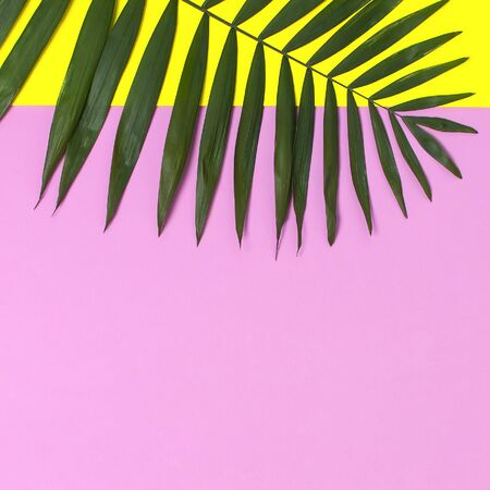 Tropical palm leaves on bright yellow pink background. Flat lay, top view, copy space. Summer background, nature. Creative minimal background with tropical leaves. Leaf pattern. Stock Photo