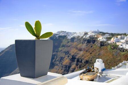 White architecture on Santorini island, Greece, Aegean sea, Europe. Beautiful summer landscape, sea view. Green cactus in the pot on the streets. Famous travel destination.