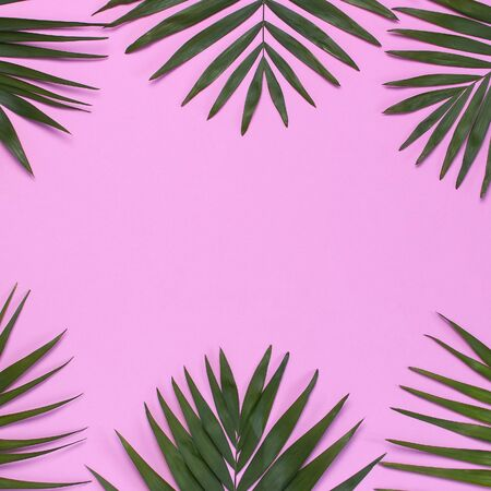 Frame of tropical palm leaves on pastel pink background. Flat lay, top view, copy space. Summer background, nature. Creative minimal background with tropical leaves. Leaf pattern. 免版税图像