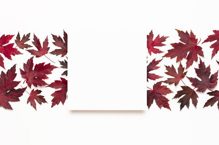 Autumn composition. Red burgundy maple leaves and blank white sheet of paper on white background. Flat lay, top view, copy space. Fall concept. Autumn background. Creative season layout.